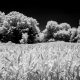 Fine art landscape photography, black and white infrared