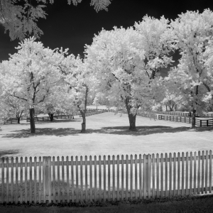Fine art pastoral landscape photography, black and white infrared
