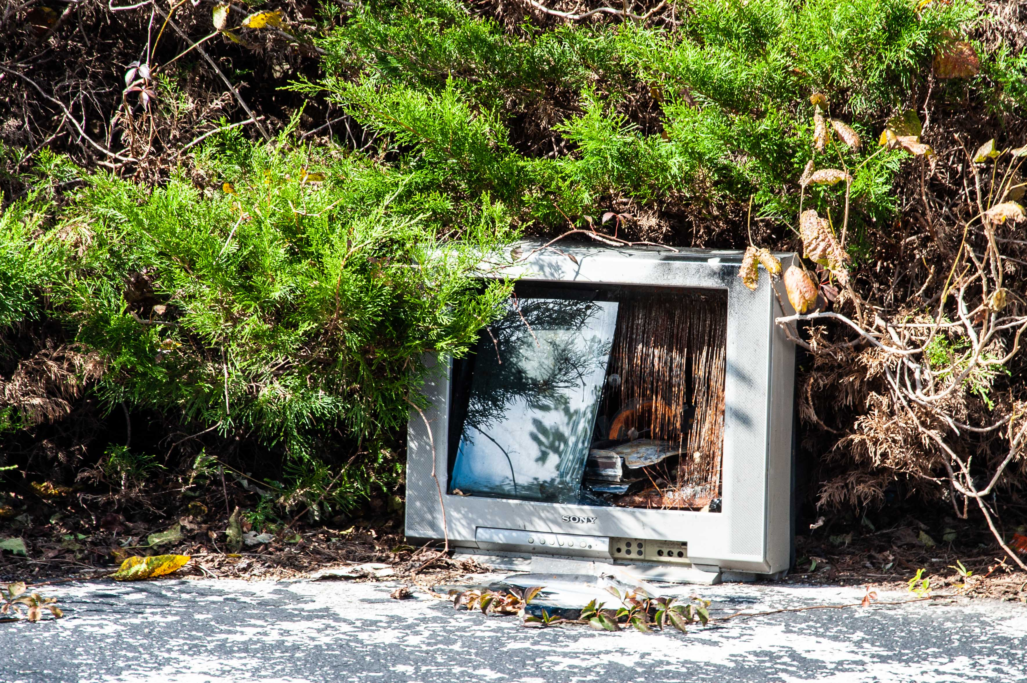 Binhammerphotographs roadside america