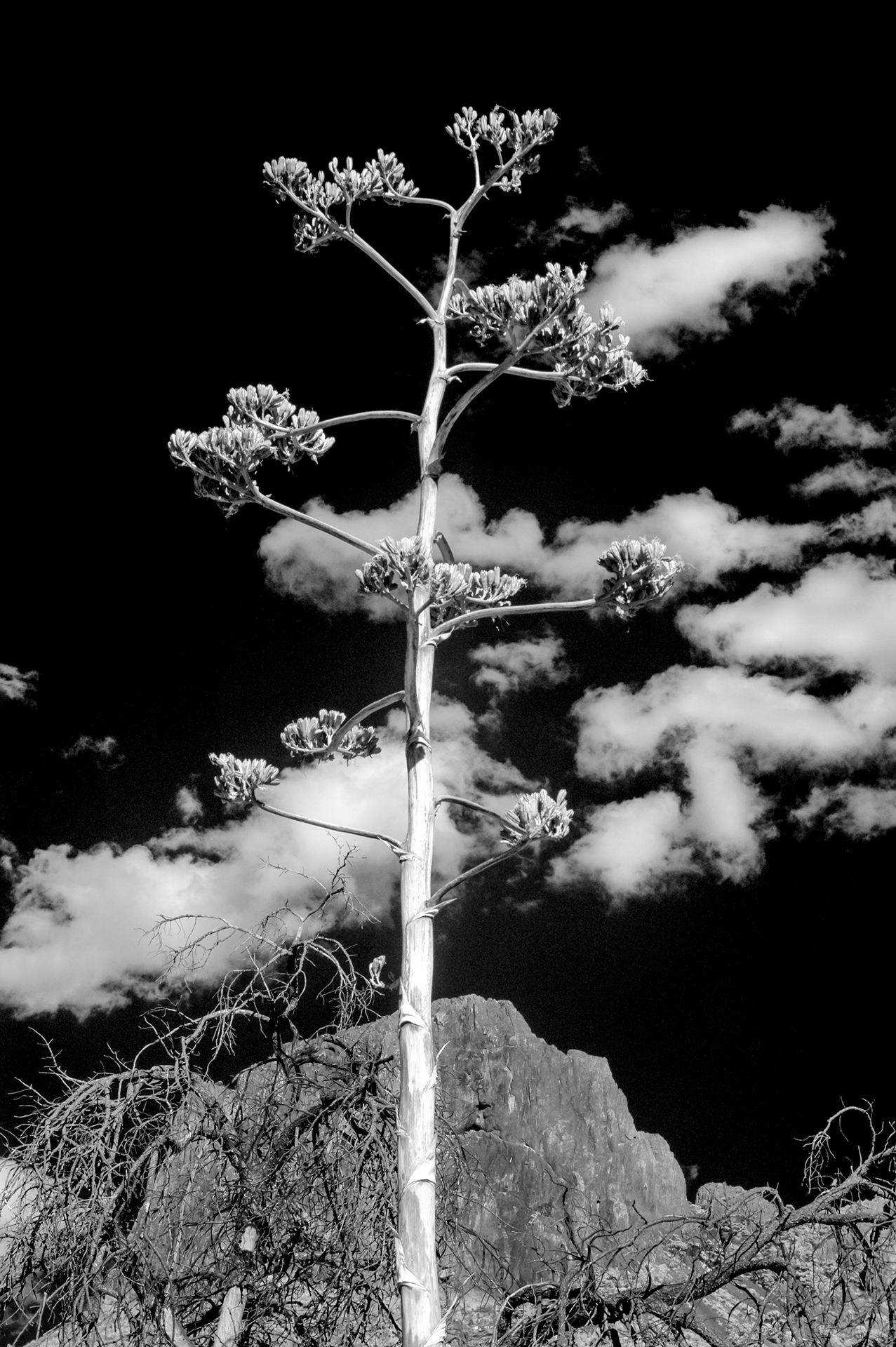 Fine art conceptual photography of cactus landscapes, black and white infrared